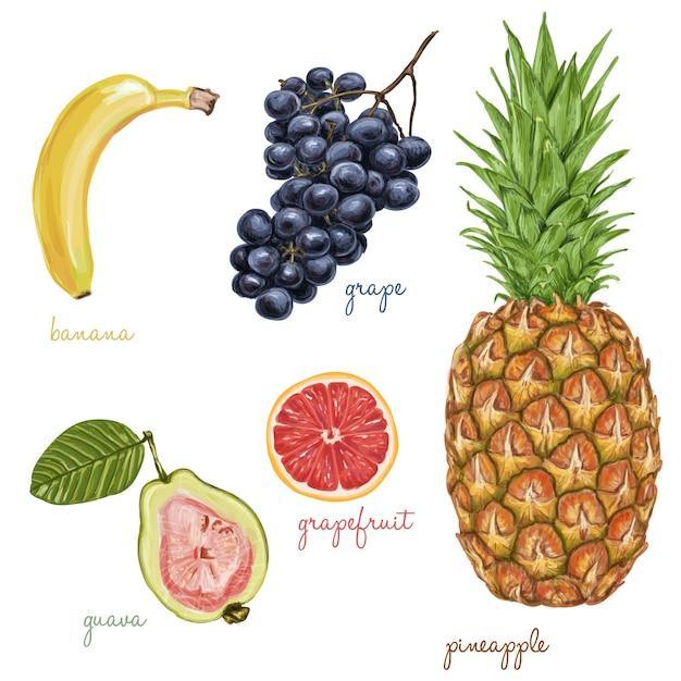 frutas exóticas doces saborosos Vetor grátis