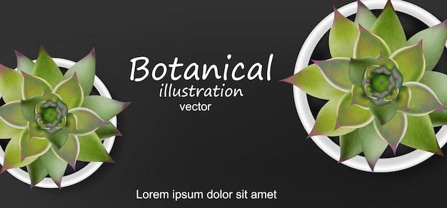 Fundo botânico de suculentas Vetor Premium