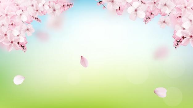 Fundo com flor rosa sakura flores desabrochando Vetor Premium