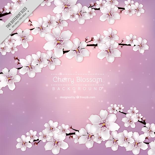 fundo da flor de cerejeira rosa Vetor grátis