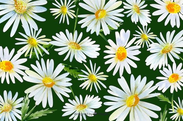 Fundo de flor linda margarida aquarela Vetor grátis