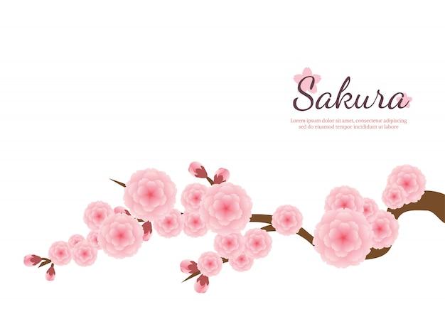 Fundo de flores de cerejeira. sakura flores cor de rosa. Vetor Premium