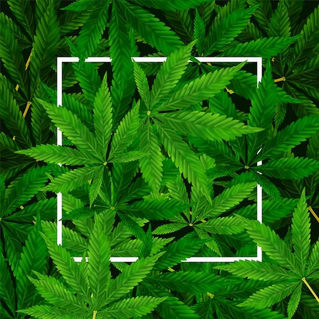 Fundo de folha de maconha ou cannabis. ilustração realista da planta em vista superior. Vetor Premium