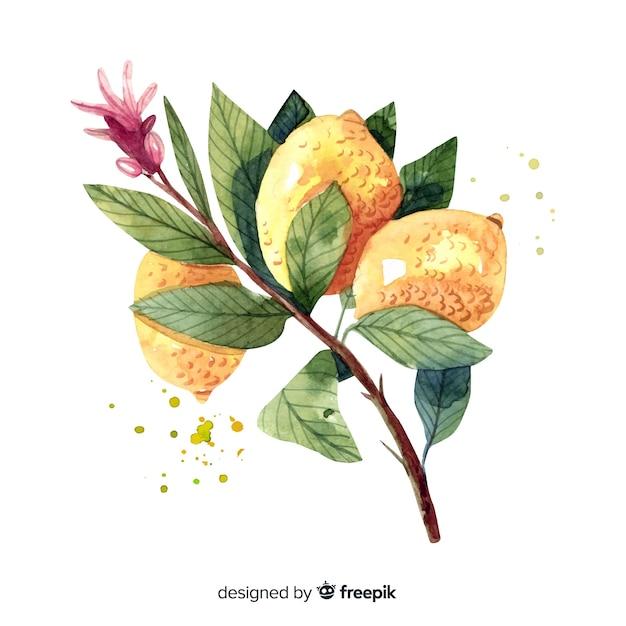 Fundo de frutas com limão aquarela Vetor grátis
