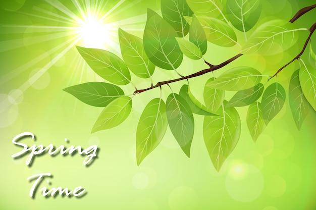 Fundo de primavera com folhas verdes frescas Vetor Premium