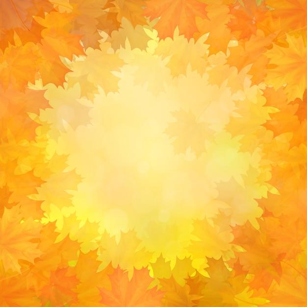 Fundo do outono com um quadro das folhas de plátano caídas em um círculo. Vetor Premium
