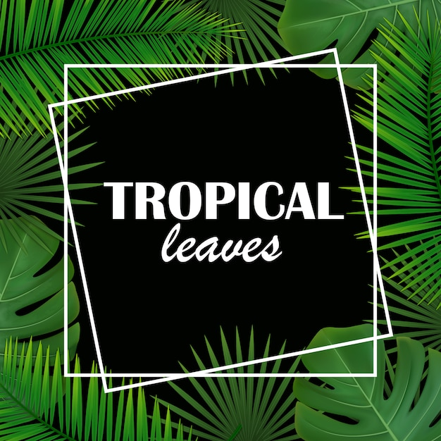 Fundo emoldurado com folhas de diferentes palmeiras e monstera. Vetor Premium