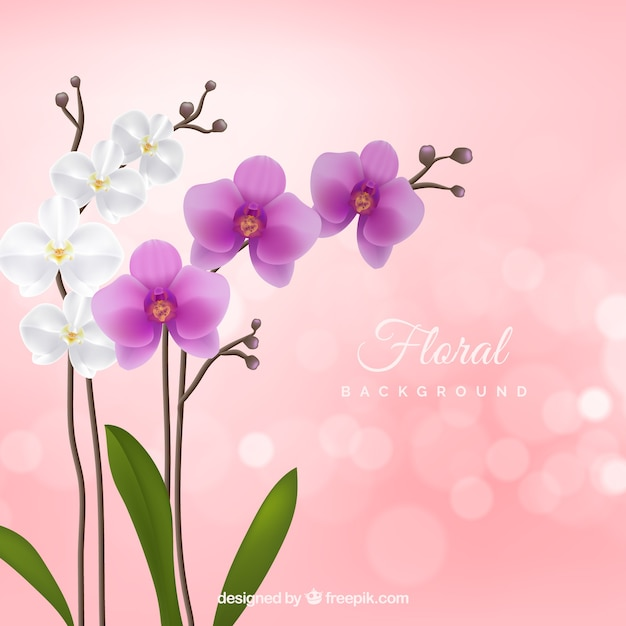 Fundo floral com orquídeas realistas Vetor grátis