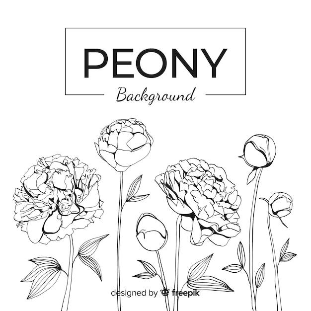 Fundo floral linear com conceito de peônia Vetor grátis