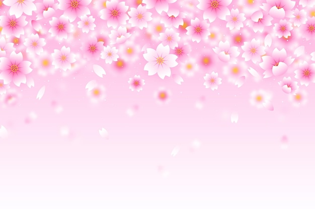 Fundo rosa gradiente de flores de sakura Vetor grátis