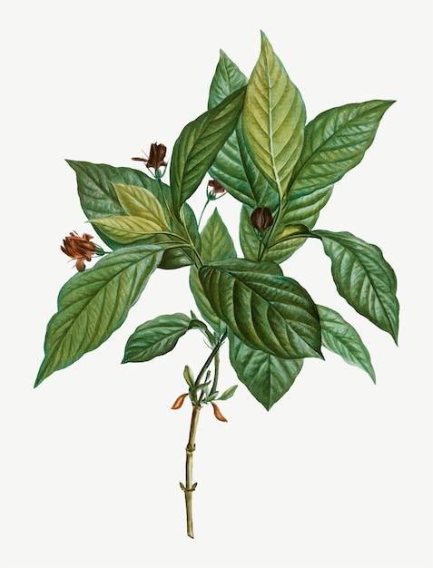 Galho de árvore Vetor grátis