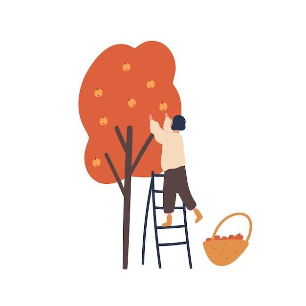 Garota reunindo ilustração plana de colheita de outono. a mulher que está na escada e que escolhe maçãs isolou o elemento do projeto. Vetor Premium
