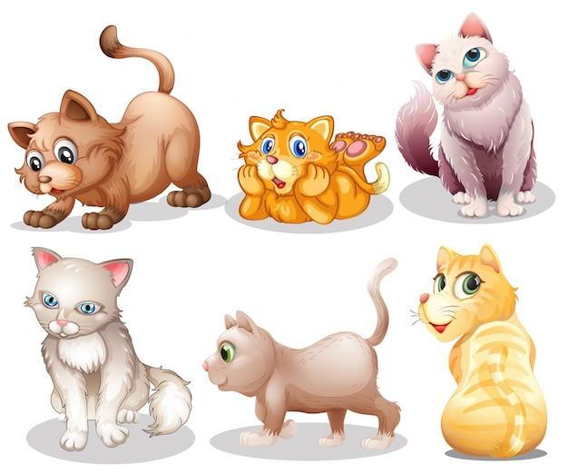 Gatos brincalhão Vetor grátis