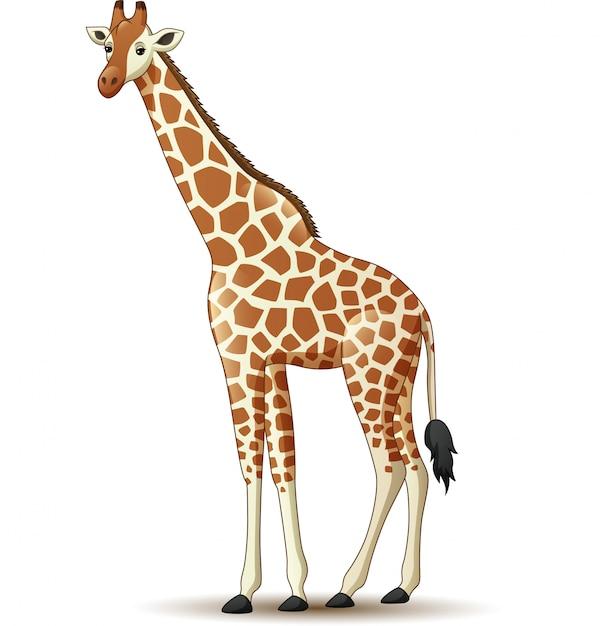 Girafa dos desenhos animados, isolada no fundo branco Vetor Premium