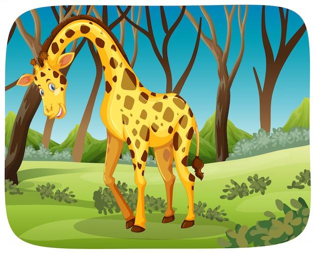 Girafa feliz na cena da natureza Vetor grátis