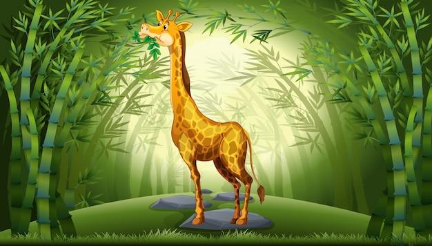 Girafa na floresta de bambu Vetor grátis