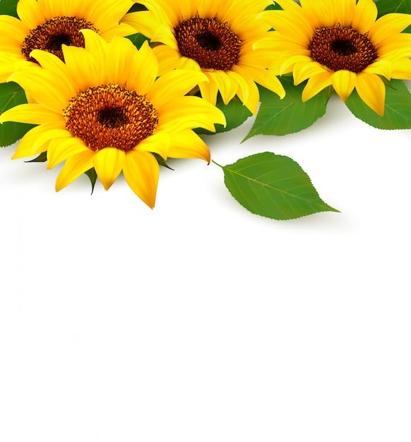 Girassóis e folhas com copyspace. Vetor Premium
