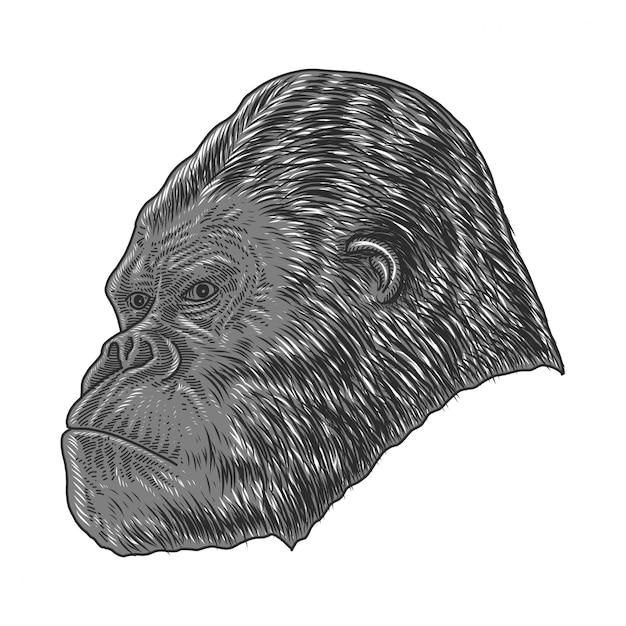 Gorila Vetor Premium