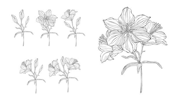 Gráficos vetoriais de uma composição floral com lírios de flores Vetor Premium