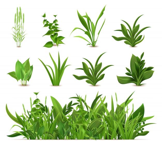 Grama verde realista primavera. conjunto de plantas frescas, grama de jardim crescimento sazonal, verdes botânicos, ervas e folhas. arbustos de gramado natural, fronteira com vegetação floral Vetor Premium