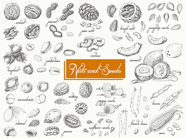 Grande coleção de nozes e sementes isoladas Vetor Premium
