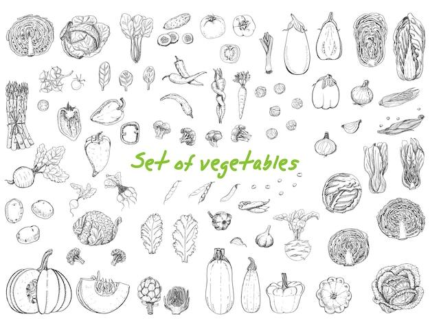Grande conjunto com legumes em estilo de desenho Vetor Premium