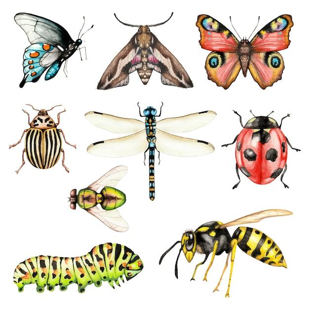 Grande conjunto de insetos em aquarela em branco Vetor Premium