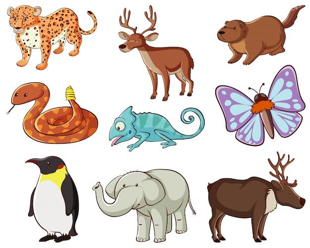 Grande conjunto de vida selvagem com muitos tipos de animais Vetor grátis