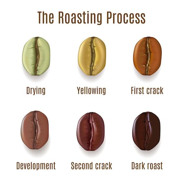 Grãos de café realistas isolados no fundo branco. ilustração dos estágios do processo de torrefação Vetor Premium