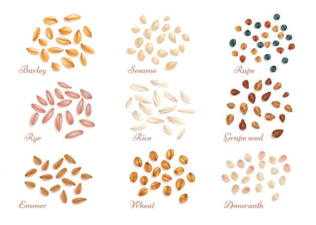Grãos de cereais realistas e conjunto de vetores de sementes de óleo Vetor Premium