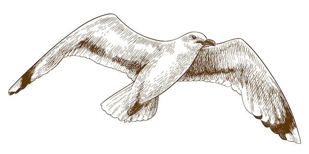 Gravura, desenho, ilustração, de, gaivota voadora Vetor Premium