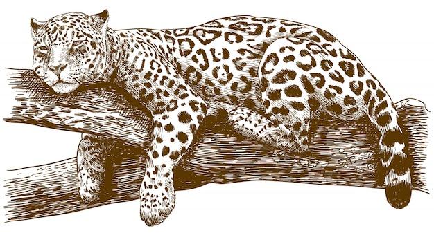 Gravura desenho ilustração de leopardo no galho Vetor Premium