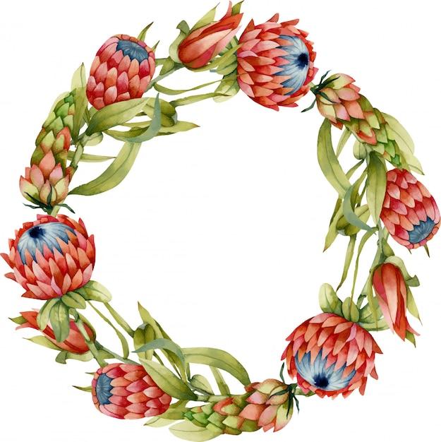 Grinalda com flores em aquarela protea Vetor Premium