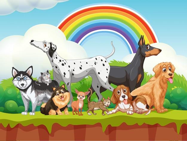 Grupo bonito cães diferentes na cena da natureza com arco-íris Vetor Premium