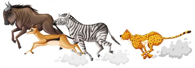 Grupo de animais selvagens está executando o estilo cartoon, isolado no fundo branco Vetor grátis