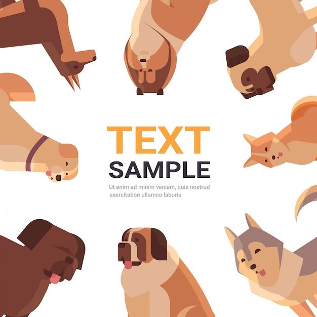 Grupo de cães de raça pura amigos humanos peludos animais de estimação coleção conceito animais dos desenhos animados conjunto retrato Vetor Premium