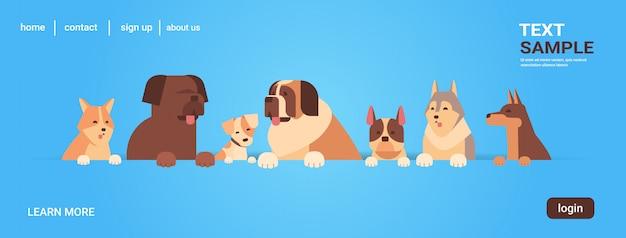Grupo de cães de raça pura amigos humanos peludos animais de estimação conceito animais retrato dos desenhos animados Vetor Premium