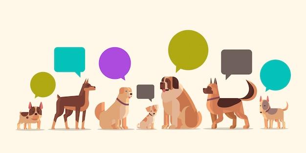 Grupo de cães de raça pura com amigos de animais de estimação em casa de estimação de discurso de bolha de bate-papo discurso humano peludo animais dos desenhos animados horizontal Vetor Premium
