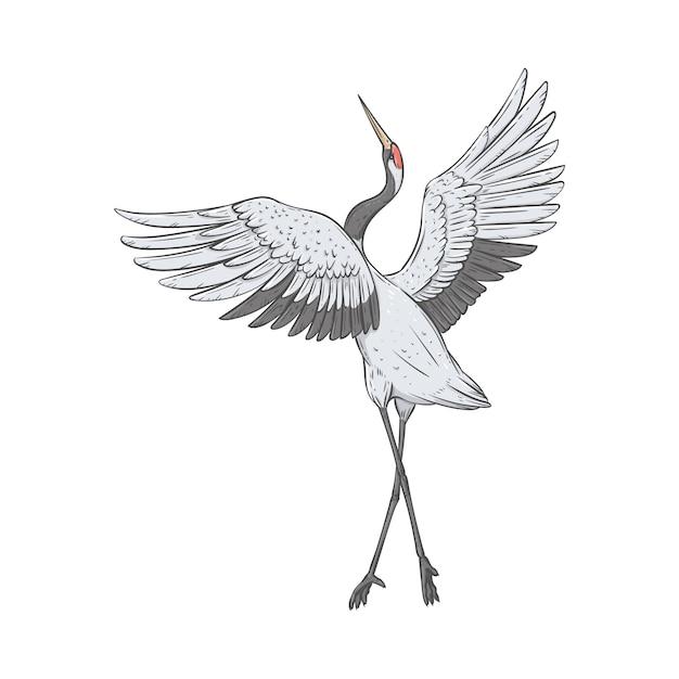 Guindaste de coroa vermelha fica em uma perna com asas levantadas, estilo de esboço Vetor Premium