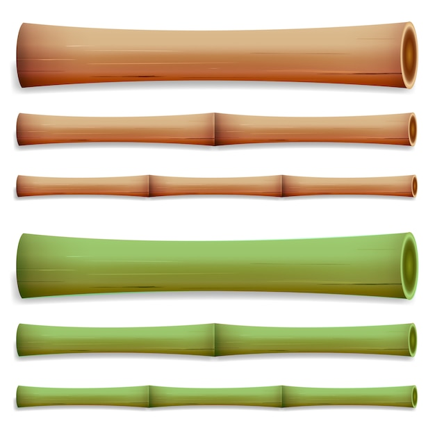 Hastes de bambu Vetor Premium