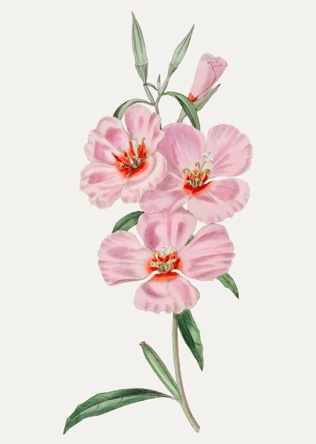Hibisco rosa Vetor grátis