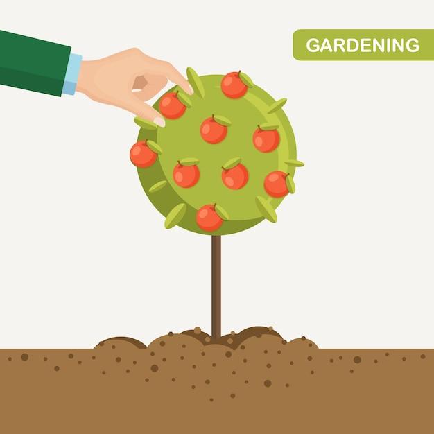 Homem colhendo maçãs no jardim. mão humana recolhendo frutas de árvores. colheita Vetor Premium
