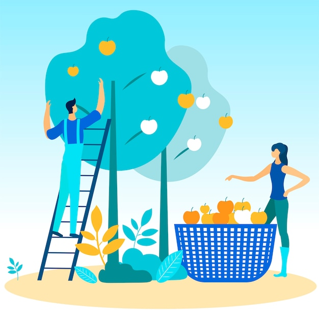 Homem e mulher na escada arranca maçãs da árvore. Vetor Premium