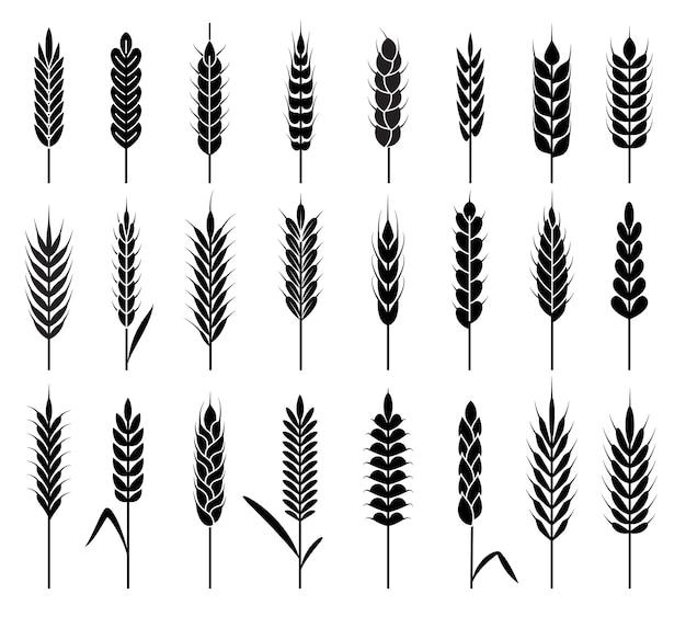 Ícones de espigas de trigo. Vetor Premium