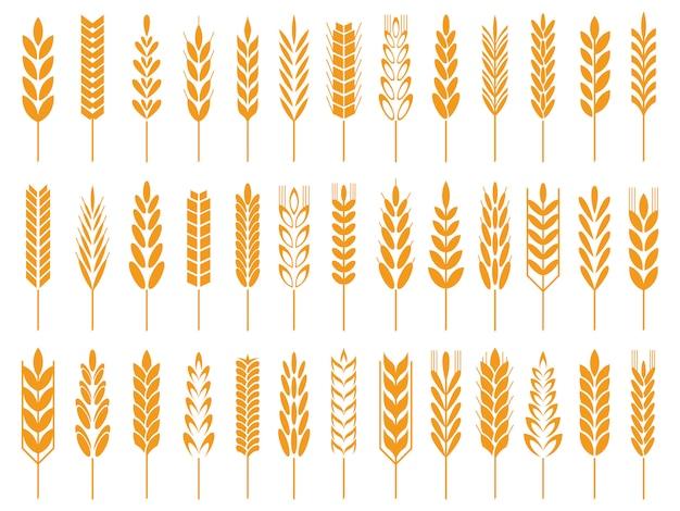 Ícones de grãos de trigo. trigos pão logotipo, grãos de fazenda e centeio caule símbolo isolado ícone Vetor Premium