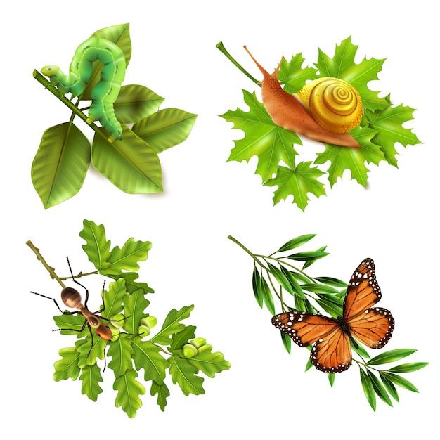 Ícones realistas de insetos Vetor grátis
