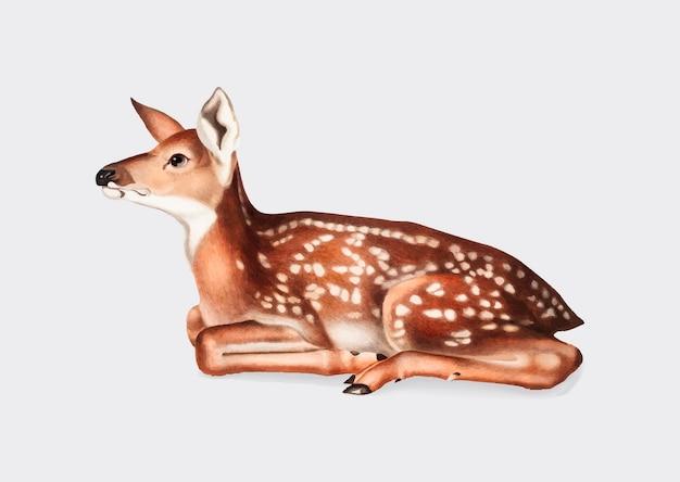 Ilustração americana dos cervos Vetor grátis