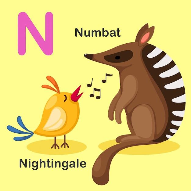Ilustração animal isolado alfabeto letra n-numbat, nightingale Vetor Premium