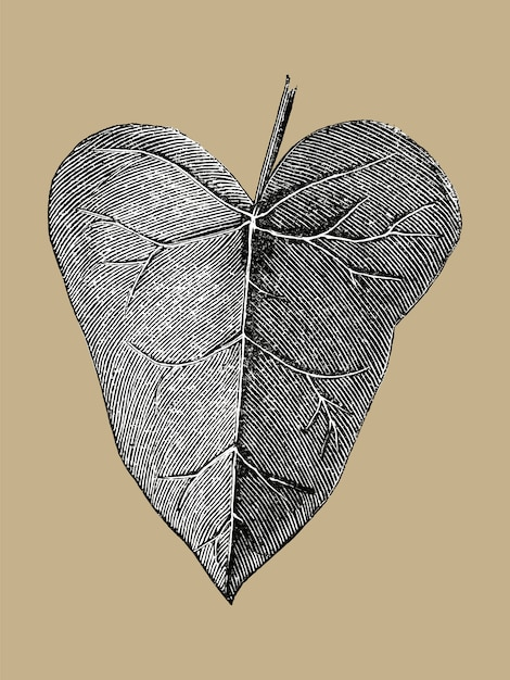 Ilustração da folha do vintage Vetor grátis