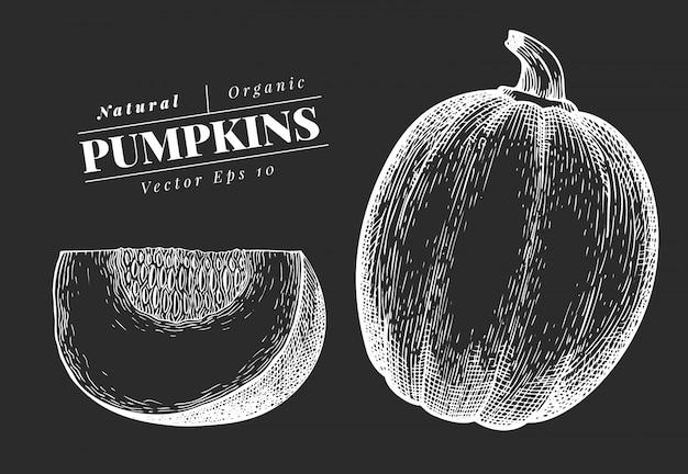 Ilustração de abóbora. mão-extraídas ilustração vegetal no quadro de giz. estilo gravado halloween ou símbolo do dia de ação de graças. ilustração de comida vintage. Vetor Premium